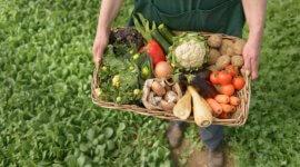 Rolnictwo ekologiczne – jak to zrobić żeby się opłacało?